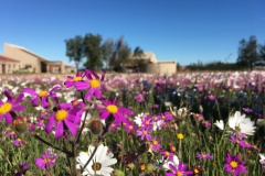 Spring-Flowers-at-50-Shades-of-Hay