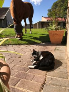 Animal interaction